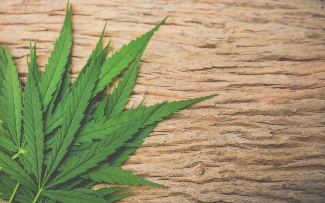 El Cannabis y la Endometriosis